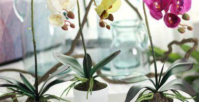 macetas para orquídeas