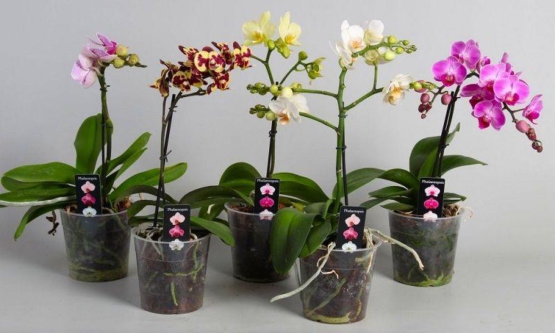 macetas para orquídeas de plástico transparente