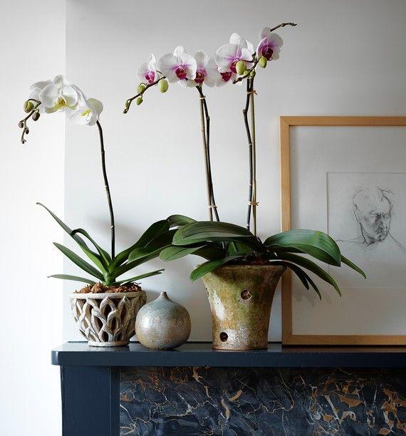 macetas para orquídeas de terracota