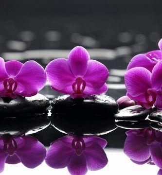 como regar una orquídea