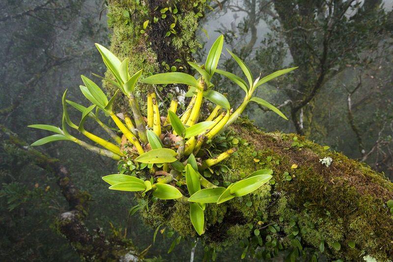 como regar una orquídea, epífitas