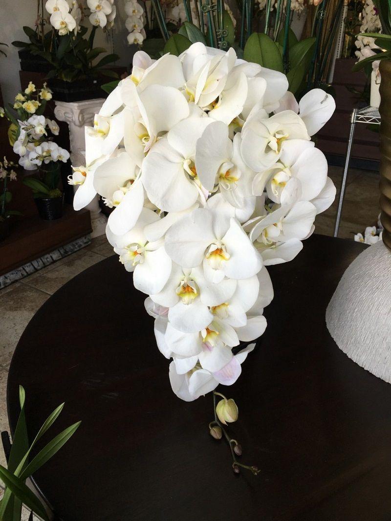 phalaenopsis orquídeas blancas
