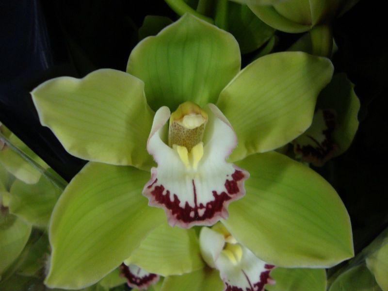 significado de las orquídeas, orquídeas verdes