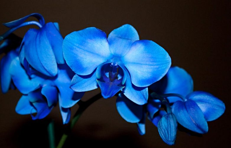 Orchid-gives-up-the-secrets-of-its-success-ograbnai