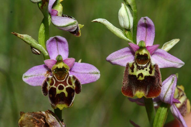 como reproducir orquídeas