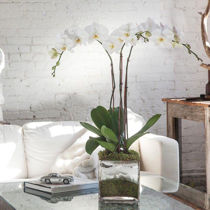 Decoración con orquídeas blancas