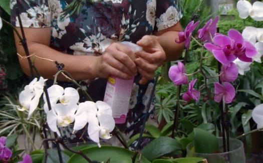 Abono Orquídeas