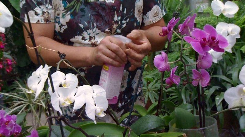 abono para orquídeas