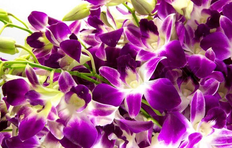 buquet de orquídeas moradas